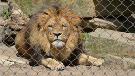 The problem with zoos