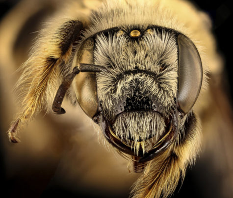 What ever happened to saving the bees, and etc.?