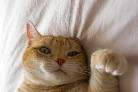 """Viewers of """"Don't F**k with Cats"""" have identified the series as one of the most disturbing documentaries."""