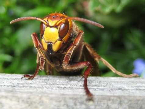 There have been four murder hornet sightings reported across North America.