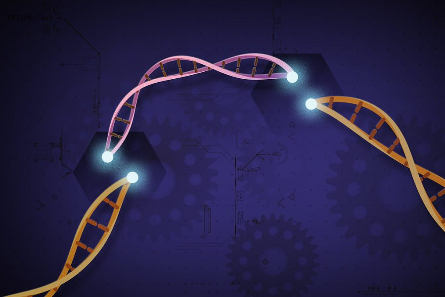 CRISPR+allows+genomes+to+be+cut+and+modified.+